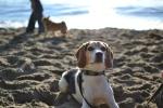 Winston posing for me
