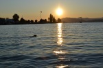 Dog swimming at sunset